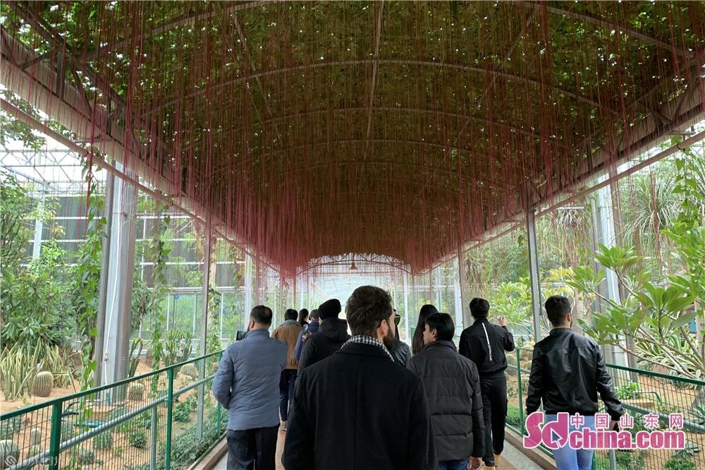 <br/>  11月10日上午,留学生一行走进潍坊寿光蔬菜高科技示范园,留学生们在这里领略了潍坊现代化的农业技术,近距离感触现代高科技农业的创意景观,感受当地的悠久历史文化和农业发展成就。<br/>