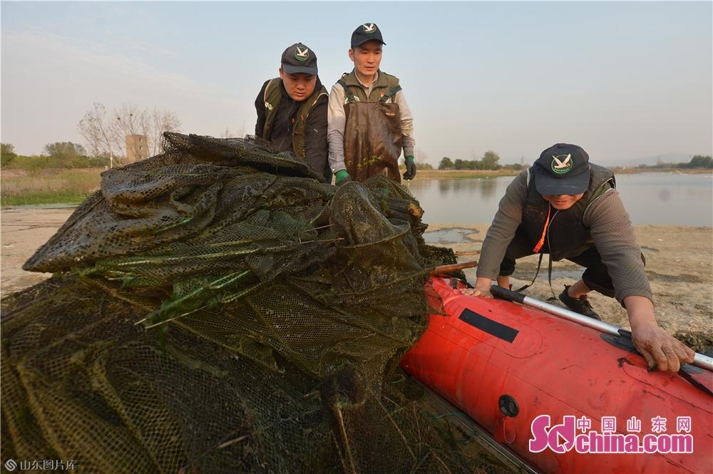 <br/>  2019年11月3日,志愿者在青岛市城阳区&ldquo;两河&rdquo;入海口候鸟栖息地清除对潜鸭类水鸟构成威胁的网具。<br/>