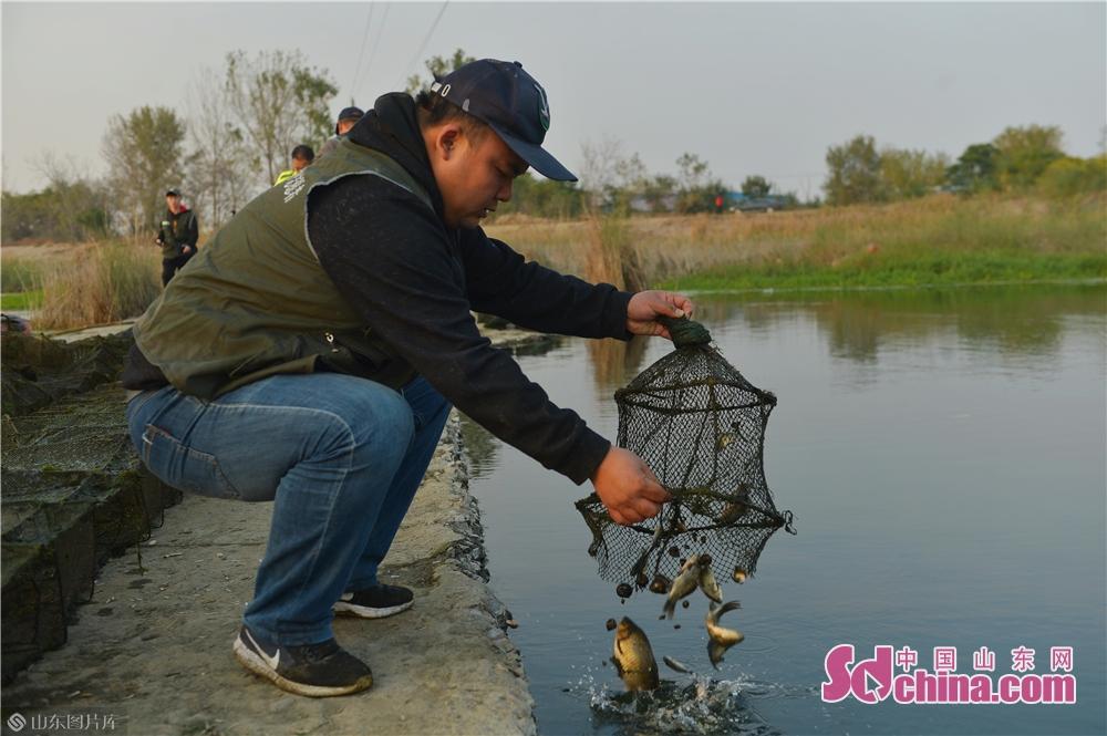 <br/>  2019年11月3日,志愿者在青岛市城阳区&ldquo;两河&rdquo;入海口候鸟栖息地取出被困网中鱼类。<br/>