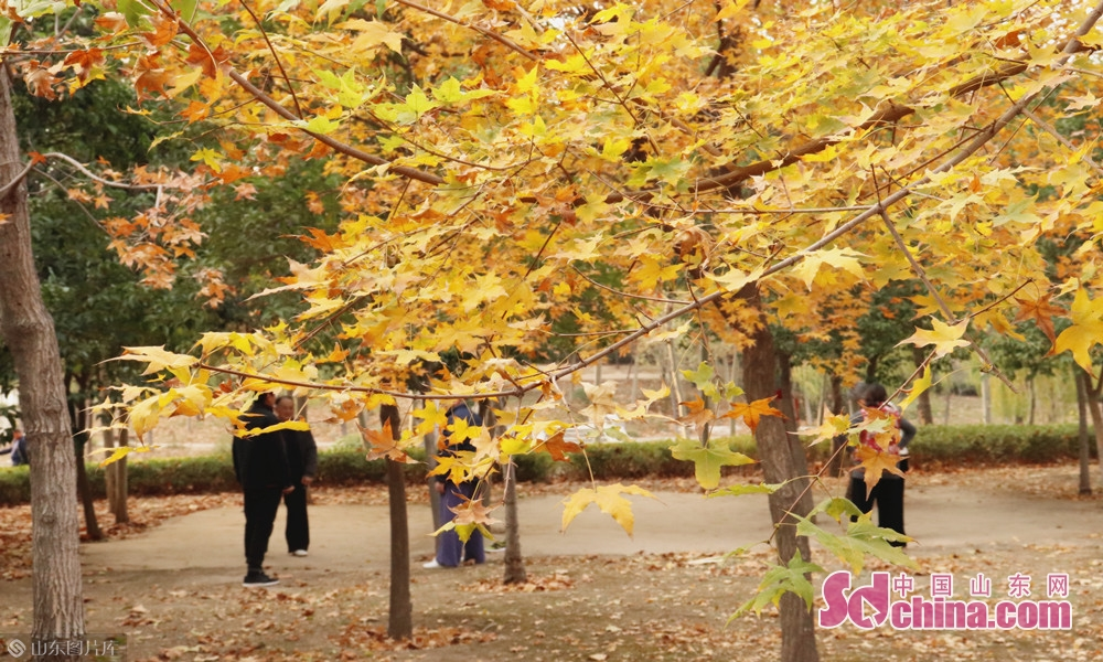 赵王河公园锻炼的老年人。