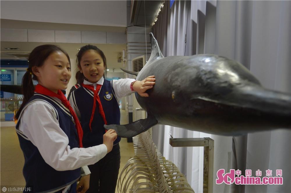 <br/><br/>  3月28日,小学生在青岛中国海洋大学海洋生物博物馆参观了解瓶鼻海豚。<br/>