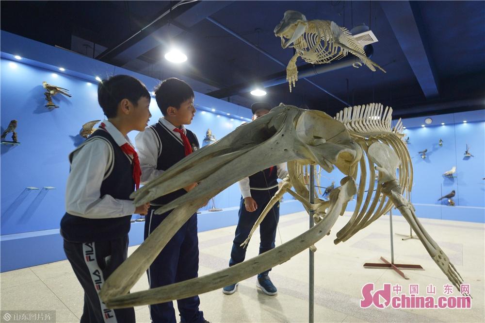<br/>  3月28日,小学生在青岛中国海洋大学海洋生物博物馆参观了解鲸鱼骨架标本。<br/>