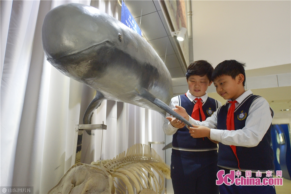 <br/>  3月28日,小学生在青岛中国海洋大学海洋生物博物馆参观了解灰海豚。<br/>