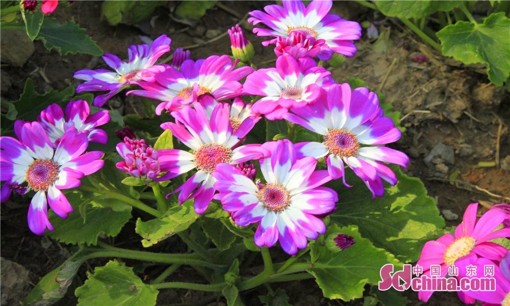 道のそばの花。