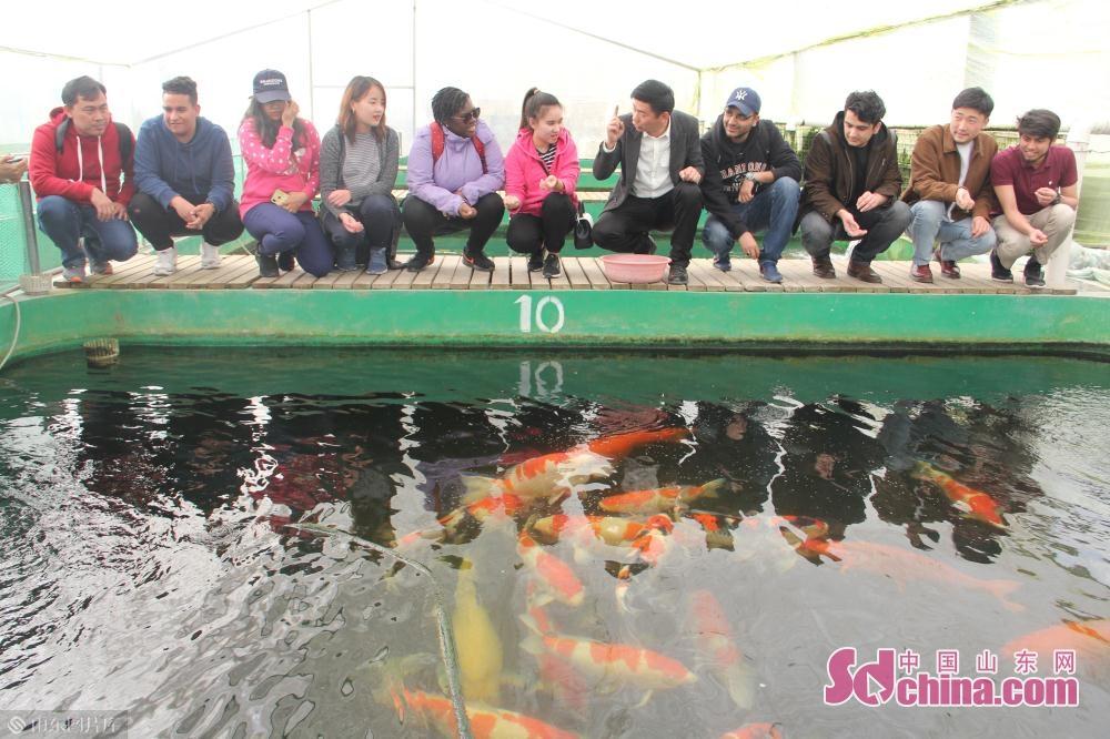 <br/><br/>  鲁泉锦鲤始建于2010年,位于济南市历城区唐王镇孙唐路北首(井家村)。<br/>