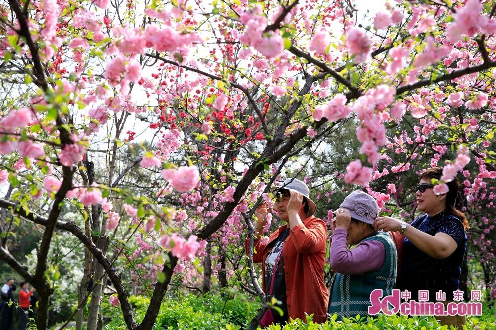 一年に一回の千仏山「3月3日」民俗文化縁日すなわち第14回千仏山「3月3日」お見合い大会が4月3日に開幕した。<br/>