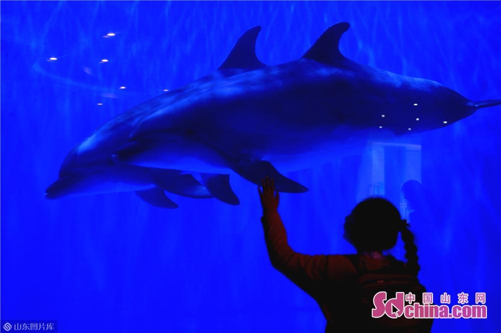 観光客は日照海洋公園でイルカショーを見ている。<br/>