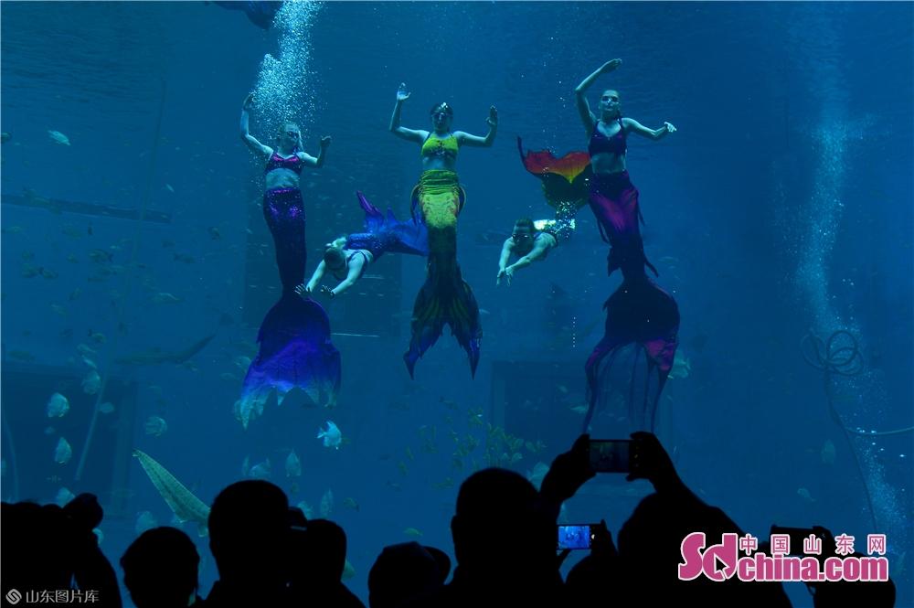 出演者は日照海洋公園で「人魚と舞う」ショーを演じている。<br/>