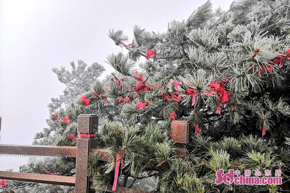 <br/>  蒙山旅游度假区海拔1156米最高处的龟蒙顶上,随着海拔升高导致的降温,龟蒙顶一带已经结冰啦!海拔千米的蒙山龟蒙景区内漫山遍野的雾凇、冰挂景观无疑成为一道靓丽的风景。<br/>
