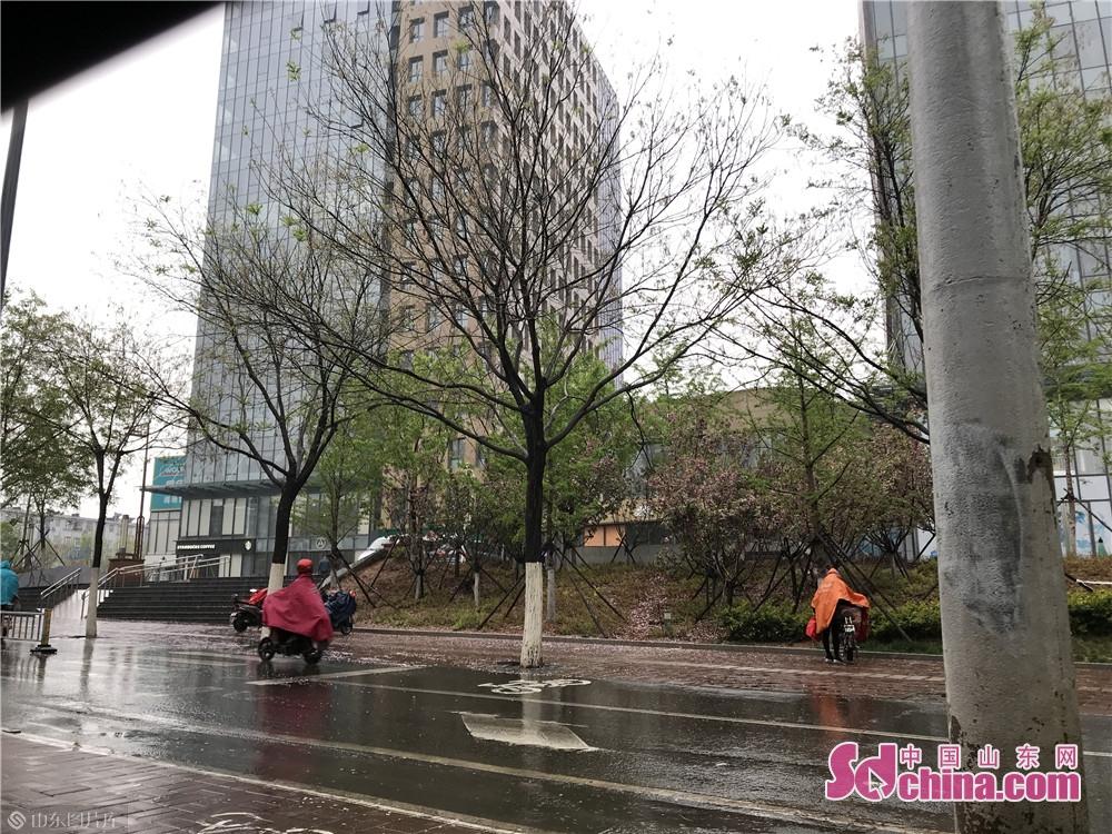 一场降雨将昨日还在盛开的樱花打落,街边风景别有一番风味。<br/>