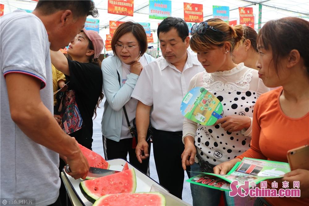 <br/>  昌乐是中国西瓜之乡,种植历史久远,可追溯至明朝早期,距今已有近500年的历史。<br/>