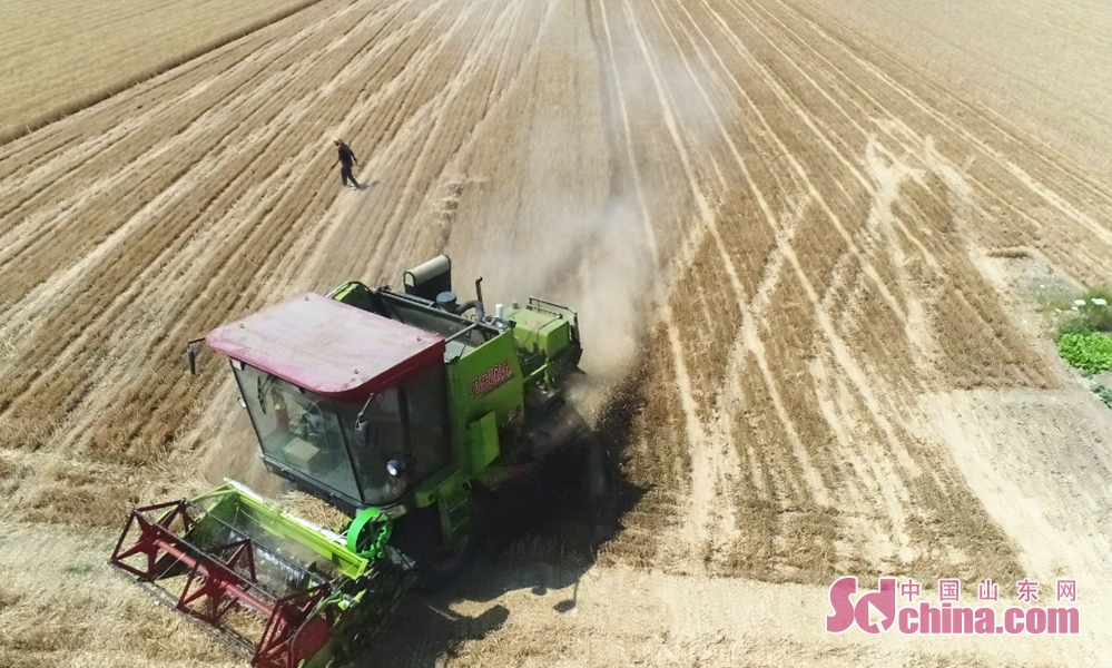 Agricultural machinery works in fields at Dingtao District in Heze City, east China&rsquo;s Shandong Province on May 30, 2019.<br/>