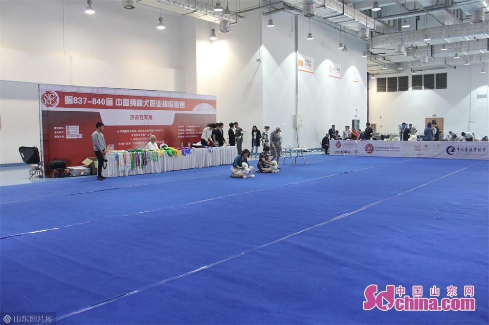 在本次展览中,还有一些职业比赛供宠物参加,尤其以猫狗居多。<br/>
