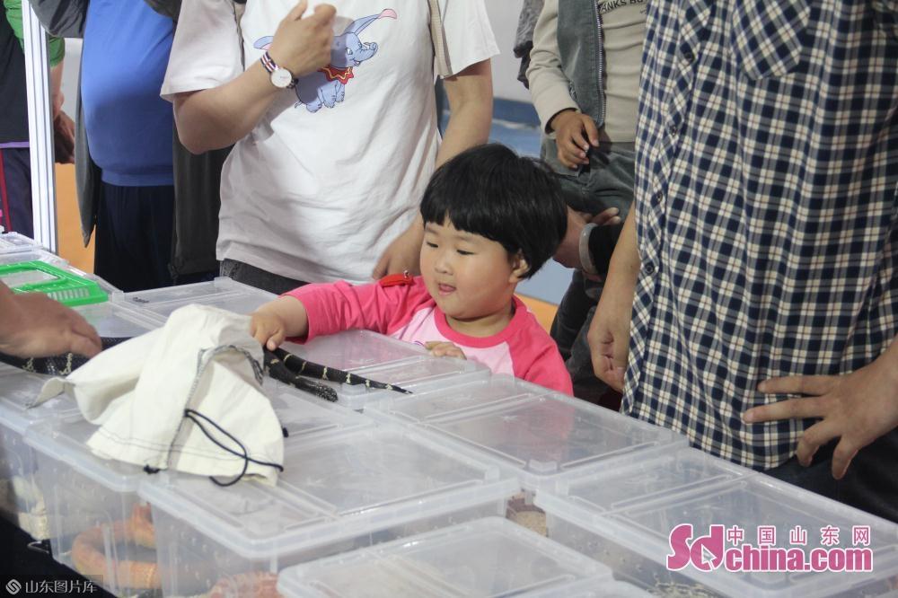 一名小女孩在父母和宠物店主的陪同下抚摸一条银环蛇。<br/>