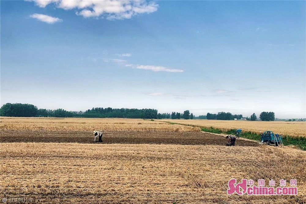 <br/>  6月9日,在山东临沂市临沭县,农民正忙着播种花生。夏收时节,农民抓住天气晴好的有利时机抢收小麦、播种花生,到处是一片繁忙的丰收景象。<br/>