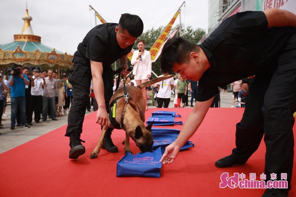 <br/>  城阳公安分局两条缉毒犬进行了现场模拟搜毒表演,现场观众上台随机摆放6个样品道具(其中一个装有冰毒),再由缉毒犬上台嗅闻搜索,赢得现场阵阵喝彩与掌声。<br/>