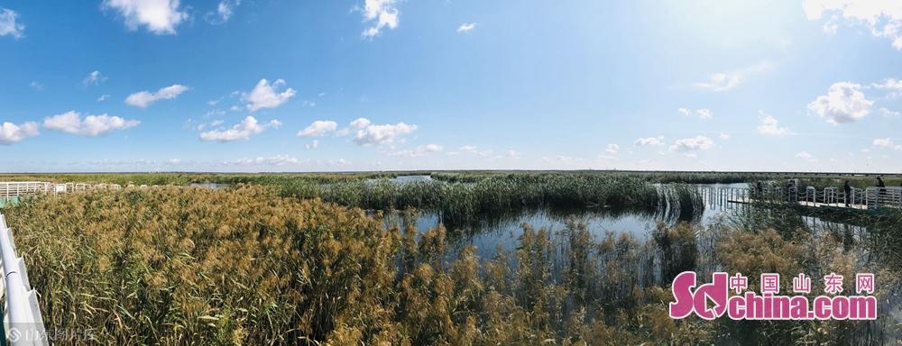 <br/>   大庆龙凤湿地自然保护区位于龙凤区境内东南,是一处位于城区中的湿地,距离市中心仅8km。地理坐标为东经125&deg;07`-125&deg;15`,北纬46&deg;28`-46&deg;33`,总面积5050.57公顷。<br/>