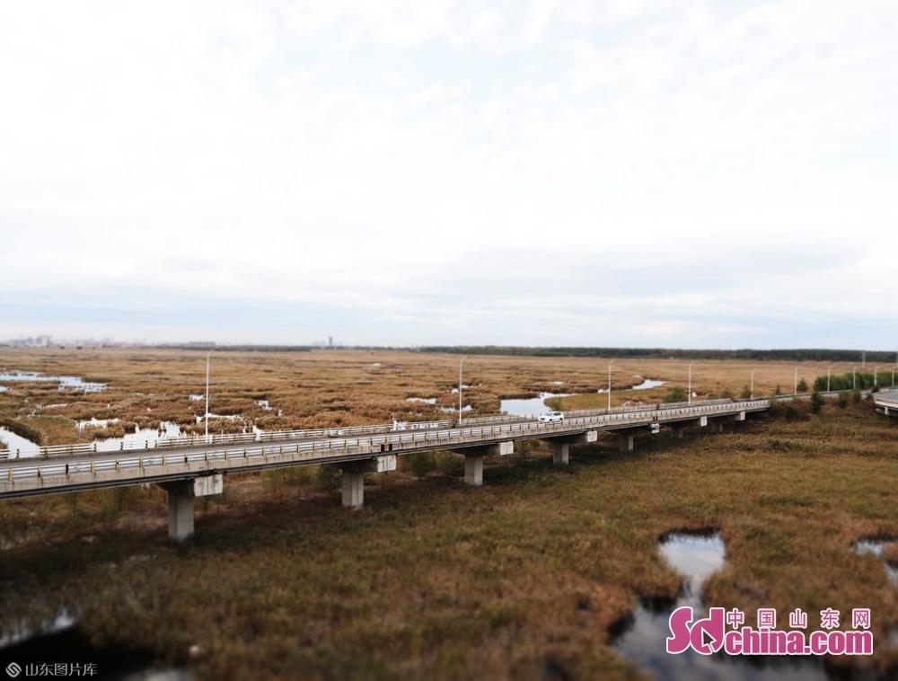 <br/>   大庆龙凤湿地跨线大桥跨越龙凤湿地保护区,起于原301国道交叉口,止于哈大路大庆出口,总长4.97 公里。它也是黑龙江省最大的铁路跨线&ldquo;特大桥&rdquo;。