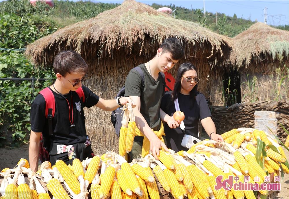 近年、陽三峪村の幹部らは村民のリーダーとして農村観光を発展させた。当地の農民は特色のあるグリーンな発展の道を見つけて、国家観光局に中国農村観光モデル村、山東省生態文明の村、中国で最も美しい鎮、ベストレジャーな村、山東省農村観光モデル機関に授与された。