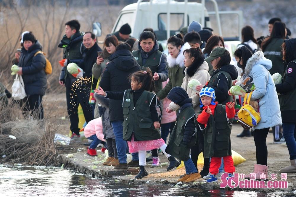 <br/>  1月12日,小志愿者在青岛市城阳区白沙河入海口湿地参加为越冬候鸟投食。<br/>
