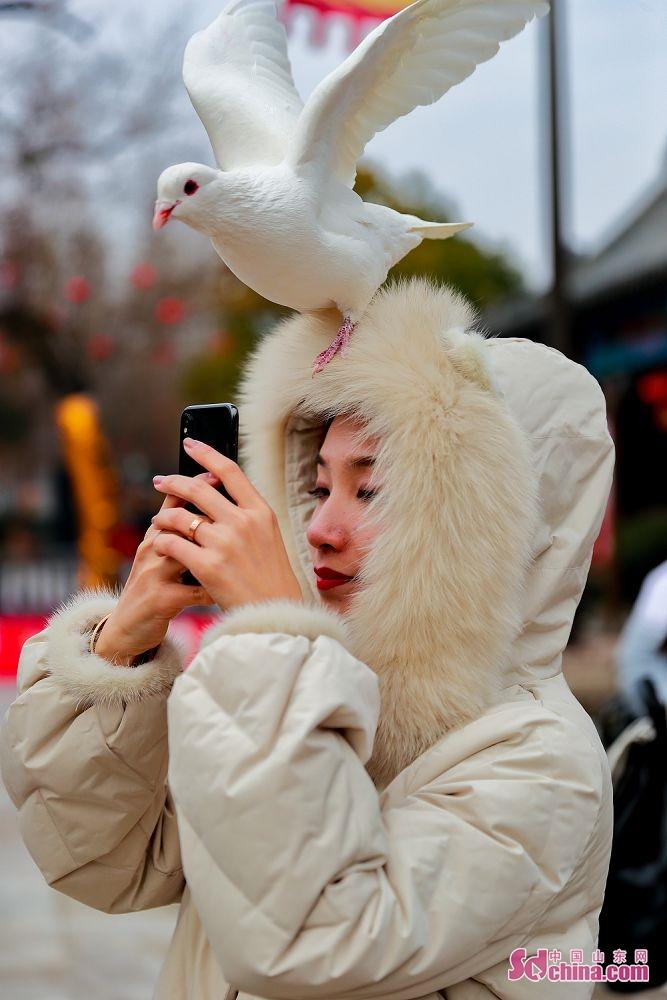 鸽子与少女。