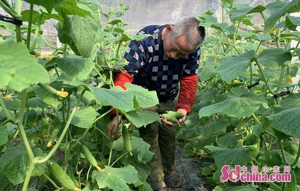 即墨区段泊岚镇:大棚果蔬种植户
