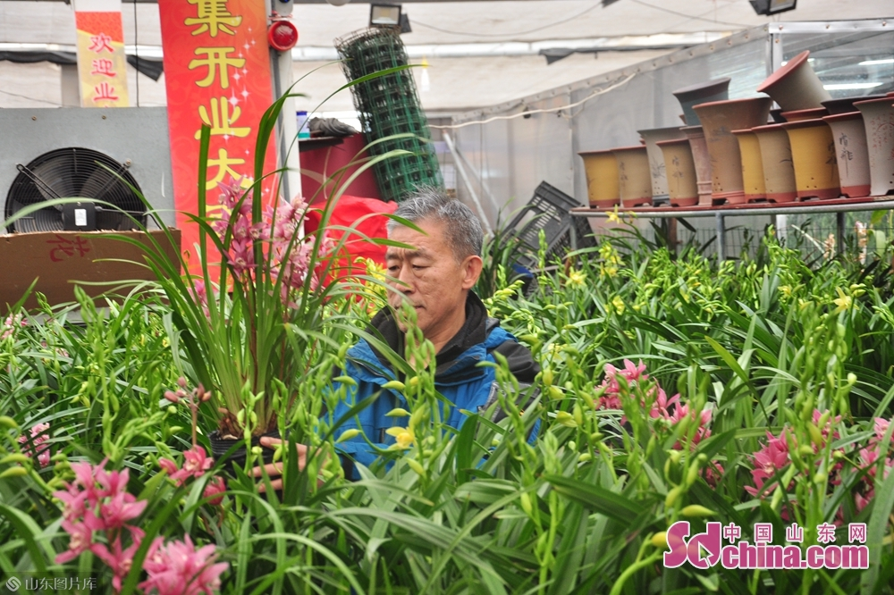 <br/>  兰花是我国的传统名花,做年宵花卉,可谓再合适不过。正可谓&ldquo;春节养兰花,芳香又文雅&rdquo;。图为市民正在选购心仪的兰花。<br/>
