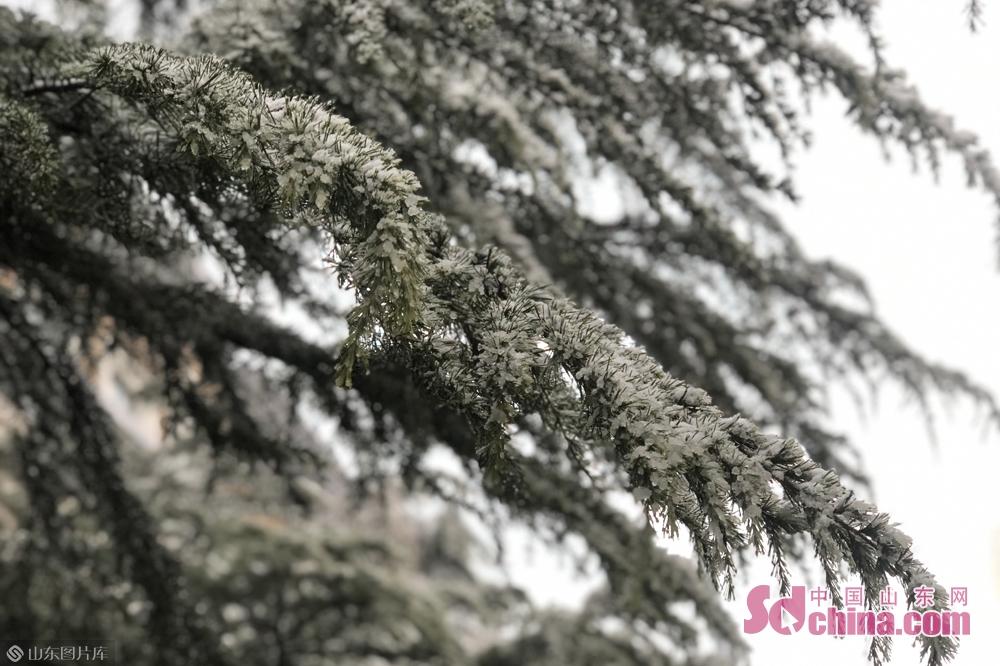 <br/>  一片片雪花从天上飘落下来,树上,丛中以及路边停放的车顶上都变成白色的了。<br/>