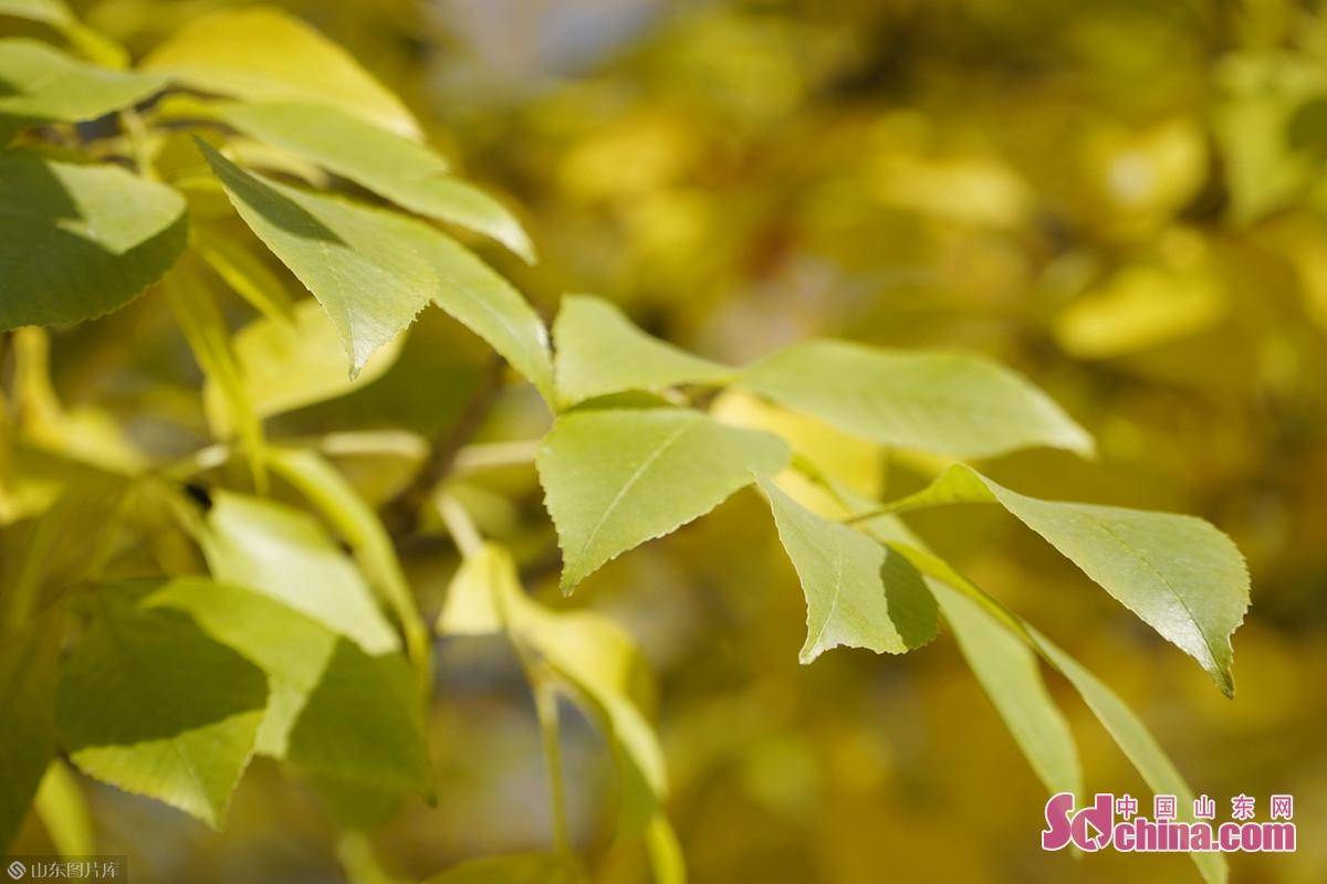 <br/>  秋高气爽,赵王河公园秋色怡人,风景正好。