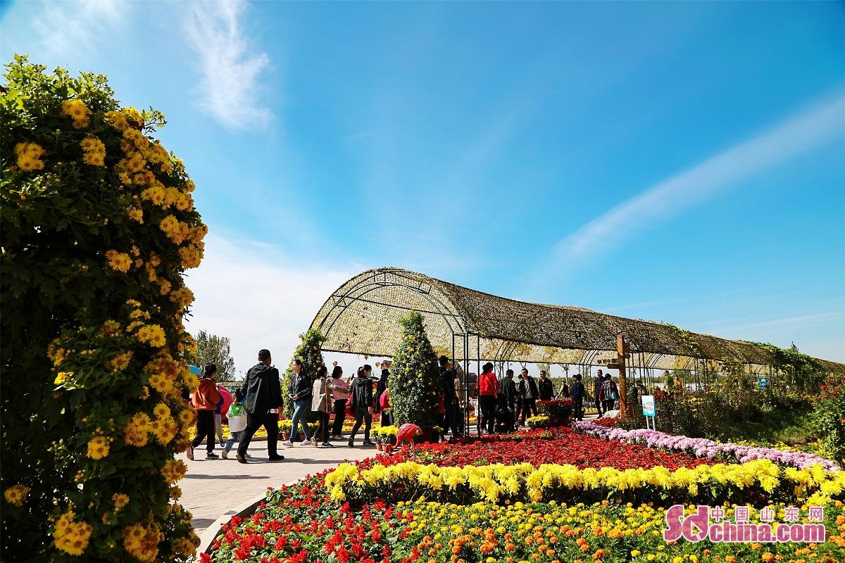 <br/>    金秋的东营花仙谷节绚丽多姿,40多个精心培育的菊花竞相开放,色彩丰富、艳丽多彩。成片的花海,置身其中感受花儿的芳香,身心好像回归田野般宁静。(图文 马仁亮)<br/>