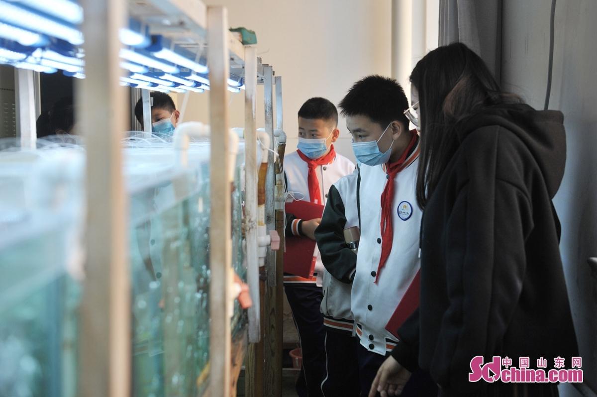 <br/>  青岛陵县路小学的学生在海洋实验室参观了解海洋藻类养殖。