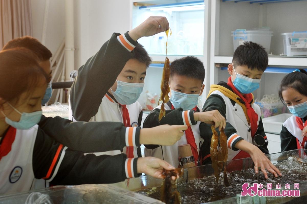 <br/>  青岛陵县路小学的学生在海洋实验室参观了解海洋藻类养殖。<br/>