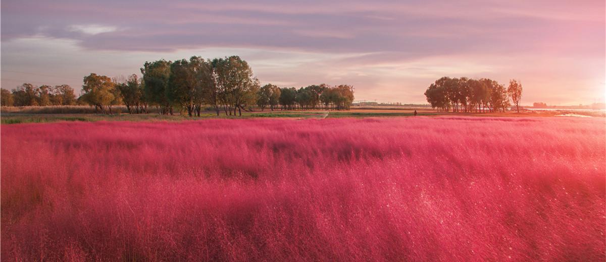 高级粉撞上落日黄,这样的绝美秋景你打卡了吗?