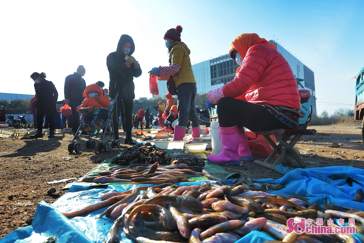 <br/>  11月24日,市民在青岛市城阳区红岛街道晓阳社区的百年渔村大集上购买新鲜海产品。<br/>