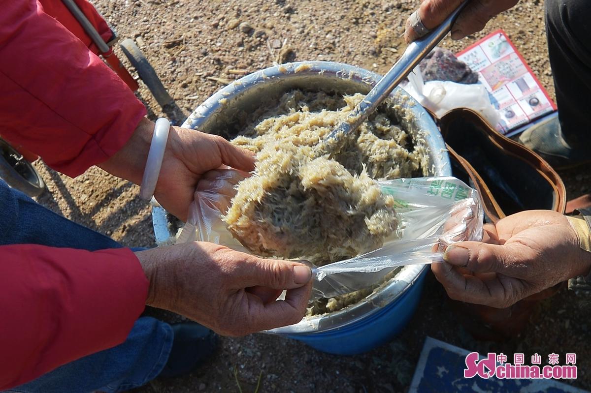 <br/>  11月24日,渔民在青岛市城阳区红岛街道晓阳社区的百年渔村大集上销售当地四小海鲜之一的&ldquo;纳米虾&rdquo;。<br/>