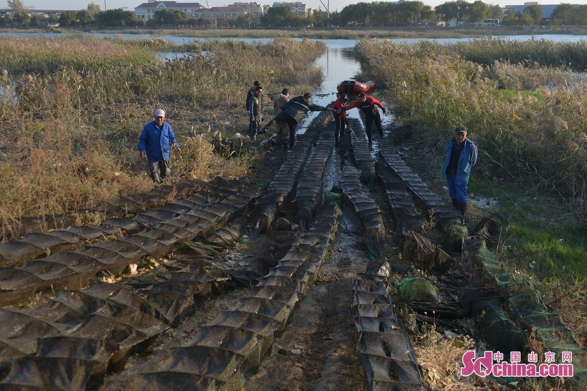 <br/>  志愿者在白沙河湿地候鸟保护区清理出的危害越冬水鸟网具。<br/>