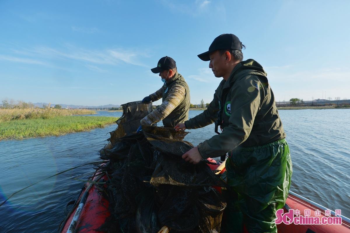 <br/>  志愿者在白沙河湿地候鸟保护区清理危害越冬水鸟的网具。<br/>