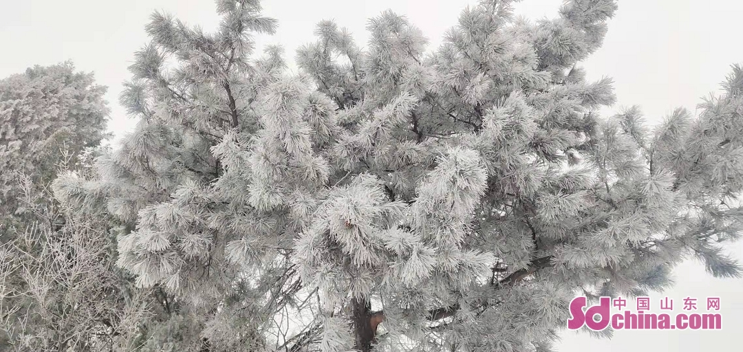<br/>  綺麗な樹冰。<br/>