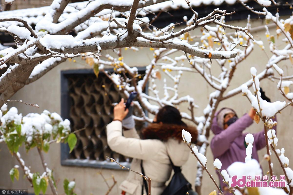 <br/>  藕神祠前,蜡梅雪中初放,吸引了不少市民游客前来观赏。<br/>