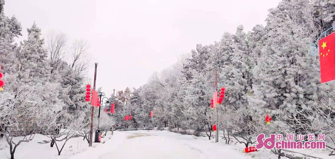 <br/>  12月28日、今回の寒波の影響を受け、山東省の大部は雪が降った。済南跑馬嶺観光スポットはまた雪が降った。<br/>