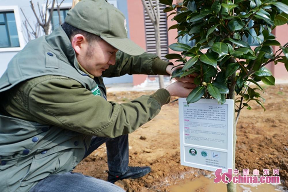 <br/>  3月10日,在植树节到来前夕,山东省青岛市城阳区野生动植物保护协会的志愿者来到白沙河入海口湿地生态岛开展植树造林活动,为水鸟繁殖地搭建生态家园。同时向14所生态教育示范学校捐赠了&ldquo;市花&rdquo;耐冬,并把&ldquo;爱鸟护绿&rdquo;知识做成公众号在各学校进行科普宣传,提高学生们的生态保护意识。3月10日,在植树节到来前夕,志愿者来到城阳十中校园捐赠&ldquo;市花&rdquo;耐冬和科普宣传展板。<br/>