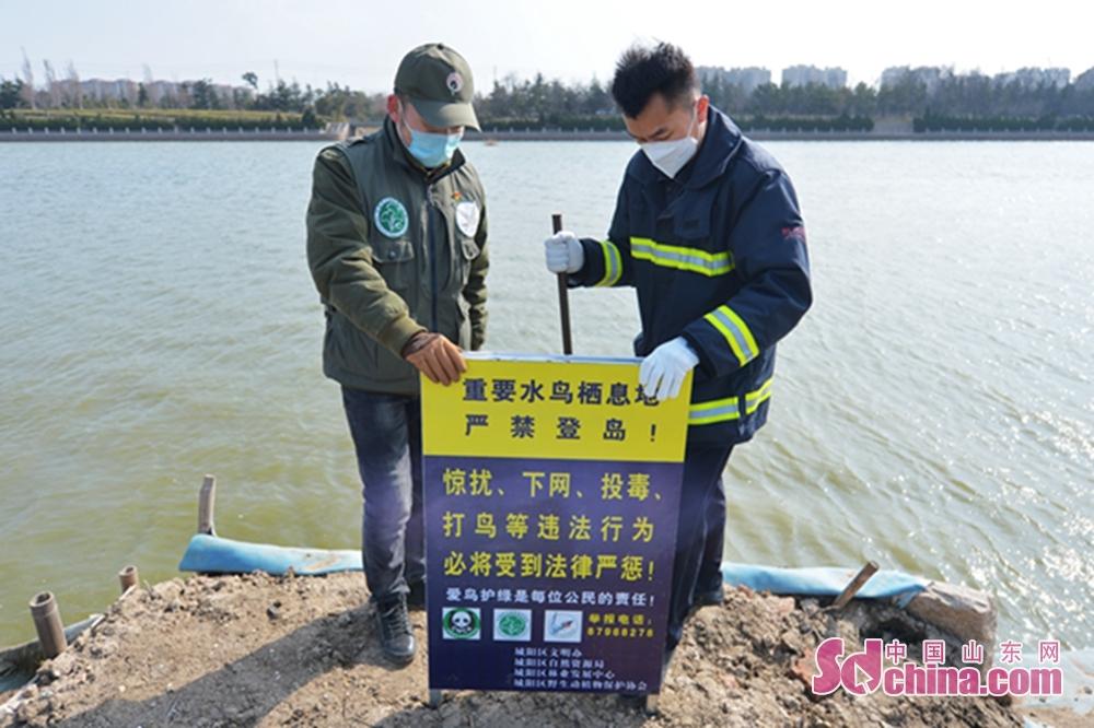 <br/>  3月10日,志愿者在青岛市城阳区入海口湿地生态岛上竖立警示牌。