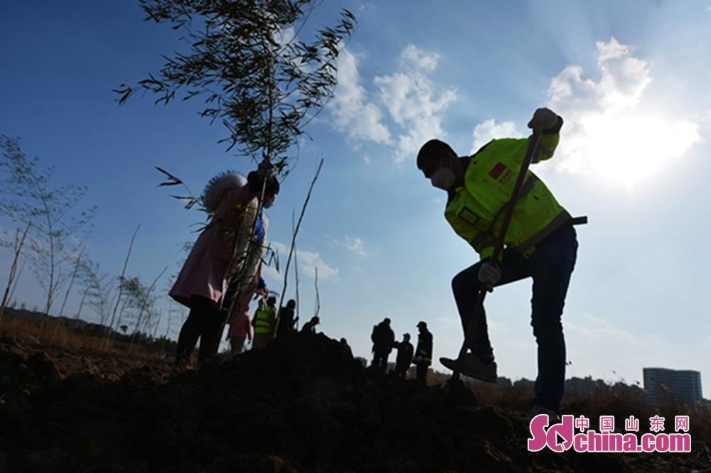 <br/>  3月10日,志愿者在青岛市城阳区入海口湿地生态岛上种植榆树和竹子。<br/>