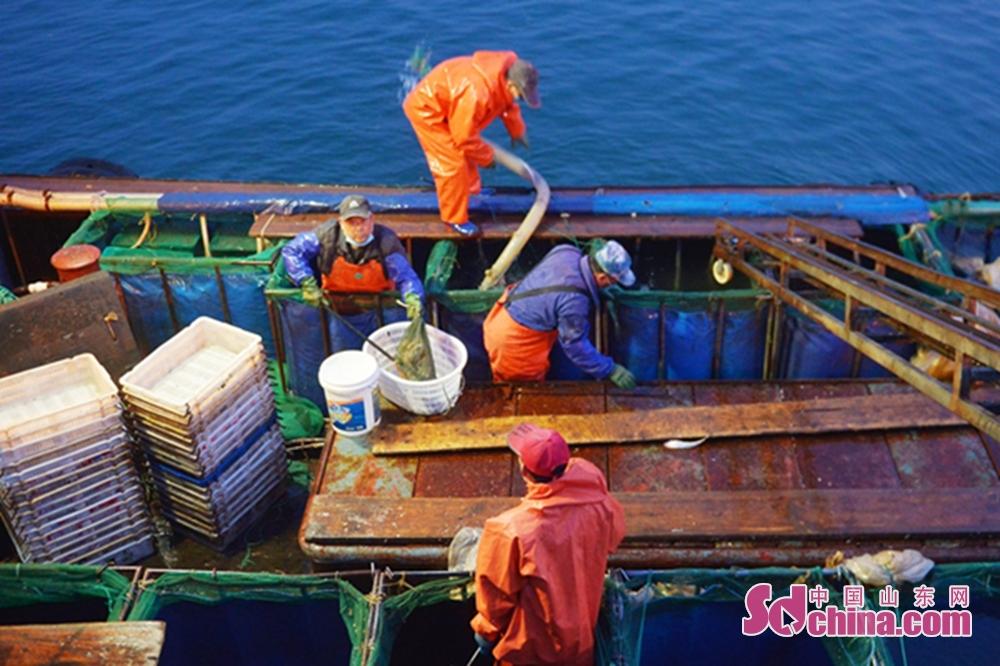 3月17日、漁師は青島市崂山区の漁港で水揚げを準備した。