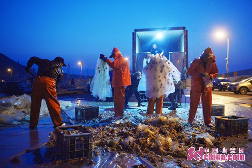 3月17日、漁民は青島市崂山区の漁港でタコを選別した。<br/>