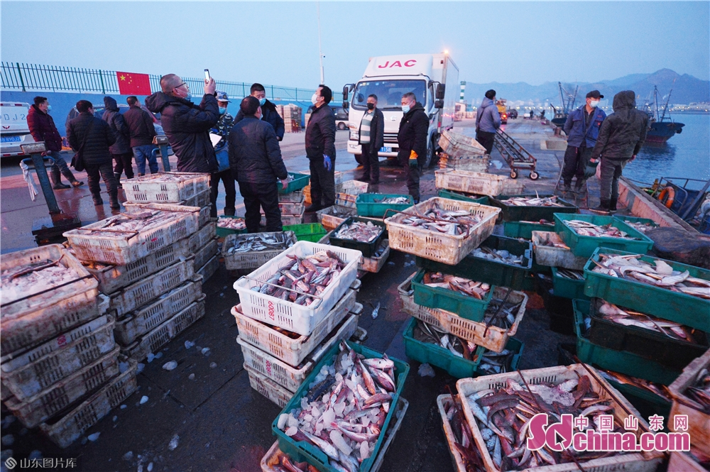 Photo taken on March 17, 2020 shows the sea fishes that fishermen brought back from their first trip to sea after the work resumption in Qingdao, East China&rsquo;s Shandong Province. (Photo by Wang Haibin/Sdchina.com)<br/>