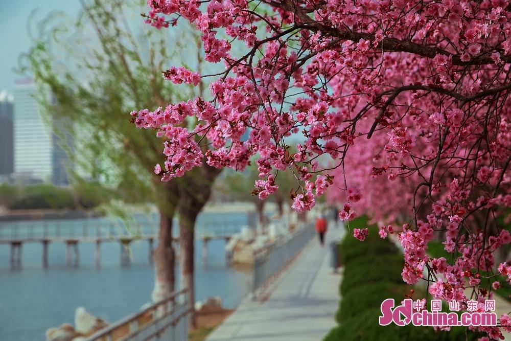 市民は花の香りを嗅ぎ、美しい景色を眺め、美しい春を味わう。<br/>