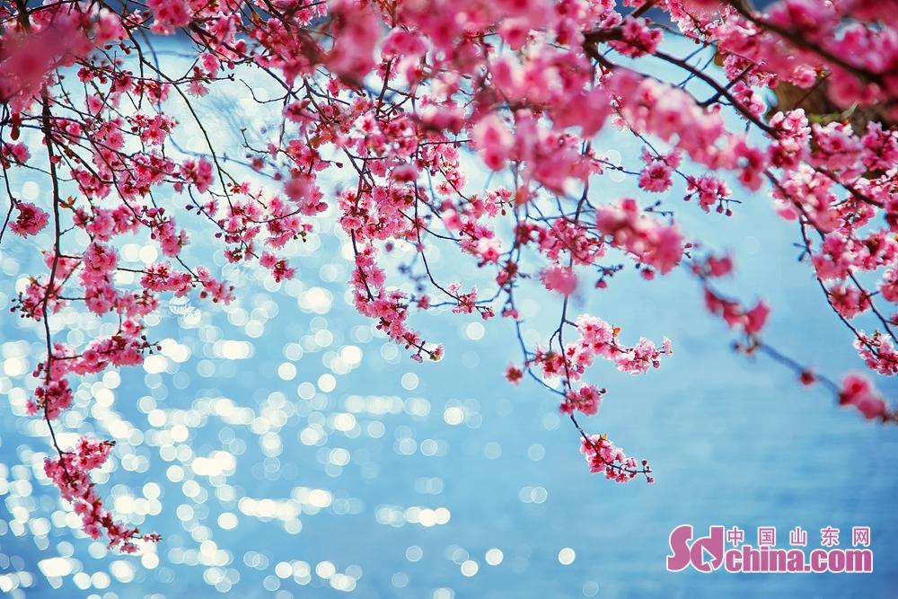 春は暖かく花が咲き、東営で春の花の香りを感じて、包まれた春の気持ちを感じた。<br/>