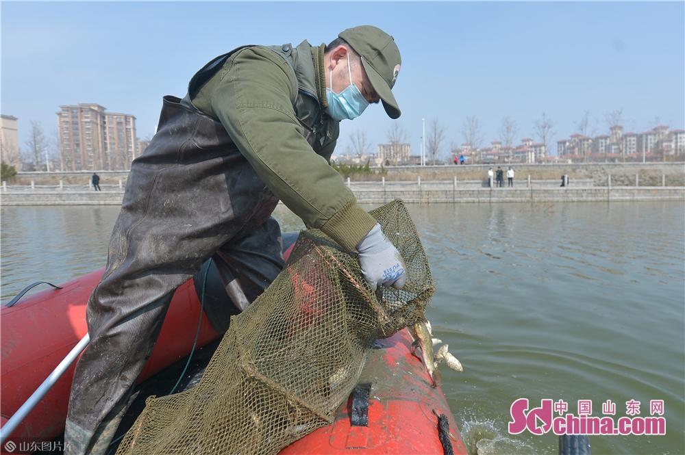 <br/>  3月2日,青岛市城阳区野生动植物保护协会的志愿者在候鸟栖息地清理地笼网,保障为以鱼为生的潜鸭类候鸟觅食安全。<br/>
