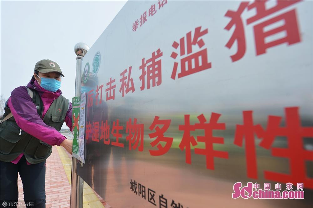 <br/>  3月2日,青岛市城阳区野生动植物保护协会的志愿者来到社区、菜市场附近张贴&ldquo;禁食野味&rdquo;海报。<br/>